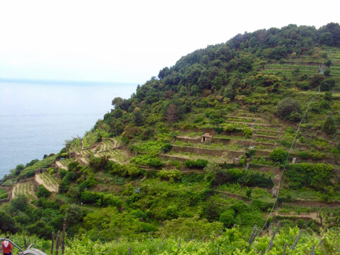 Plimbare matinala pe dealurile din Riomaggiore