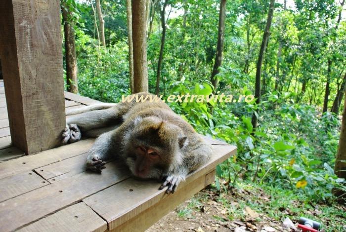 obiective lucruri de facut in Ubud Bali 16