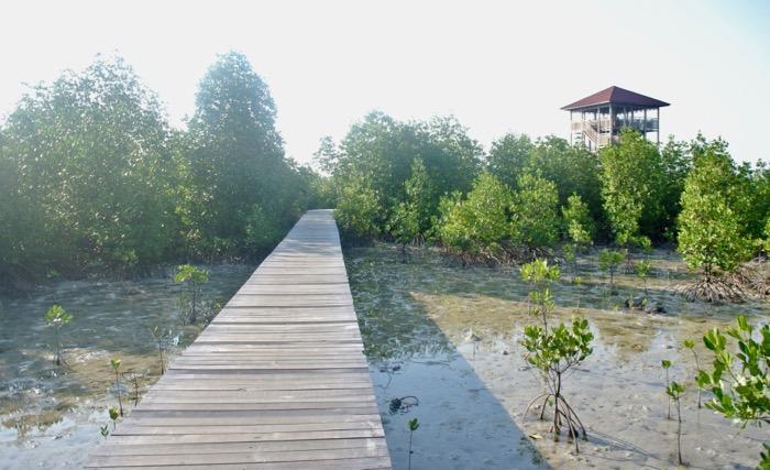 Plimbare prin padurea de mangrove din Karimunjawa Indonezia3 6