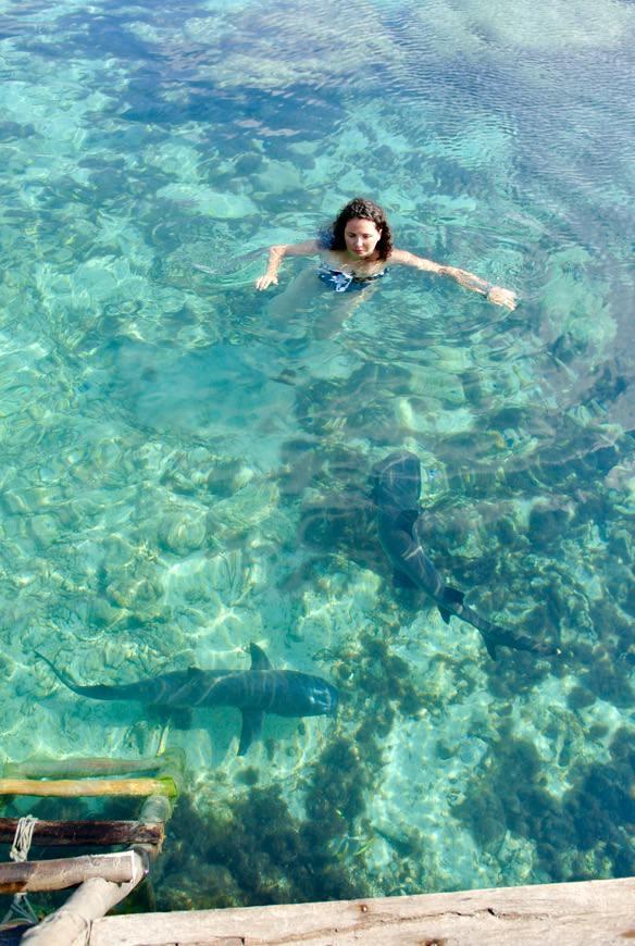 Inot cu rechini Indonezia Asia 5