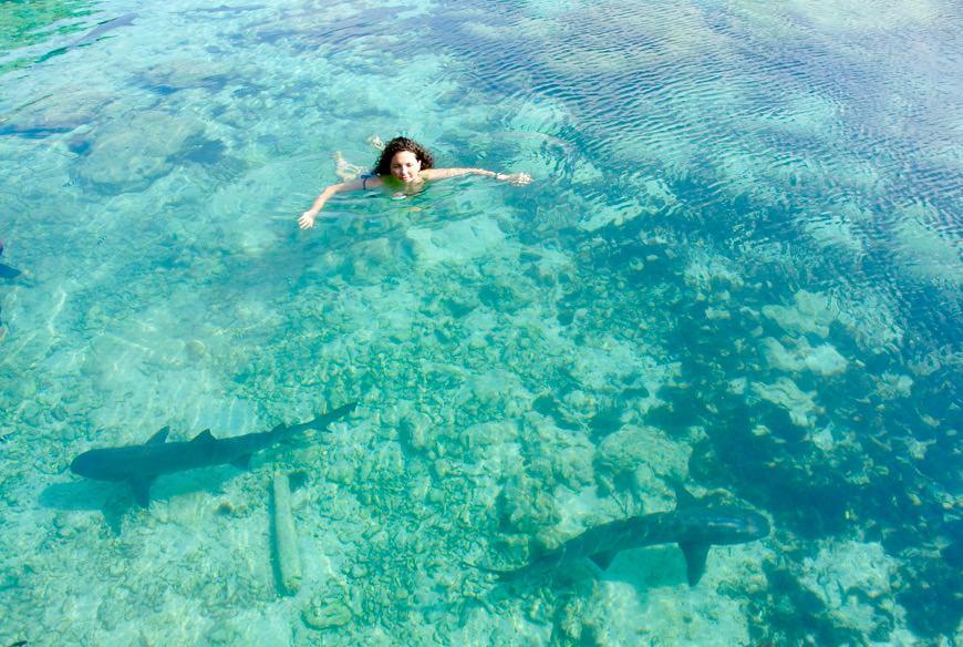 Inot cu rechini Indonezia Asia 4