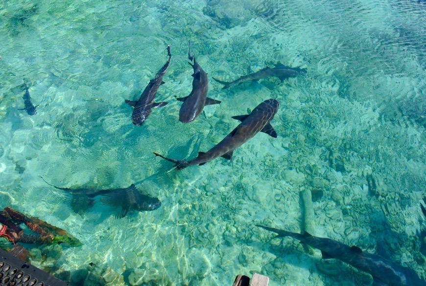 baie intr-o piscina naturala cu rechini 1