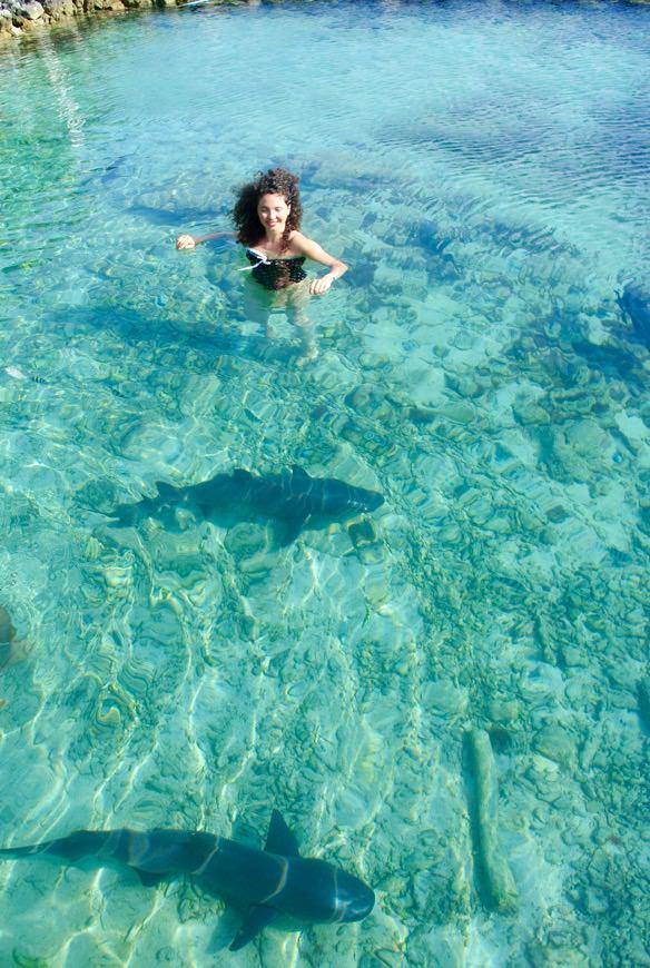 Inot cu rechini Indonezia 2 Asia