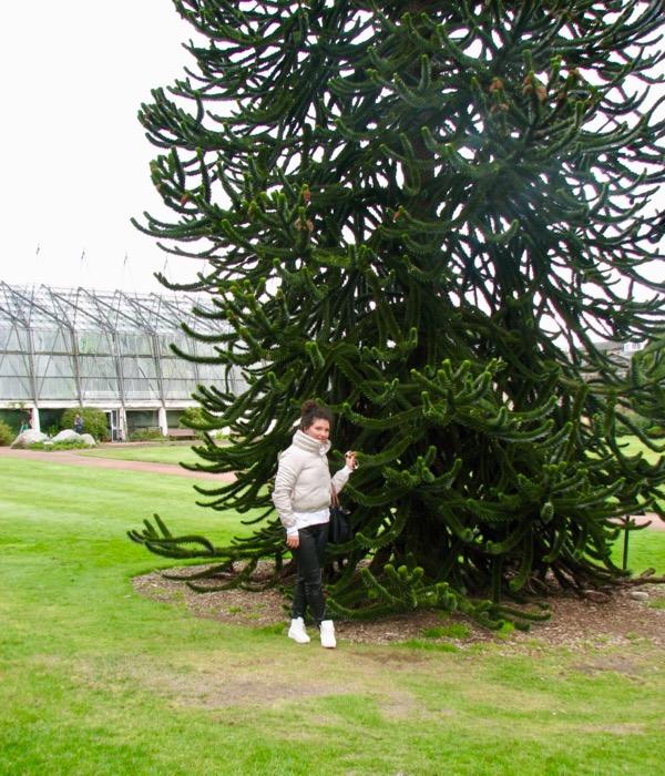 Gradina Botanica Regala din Edinburgh 7