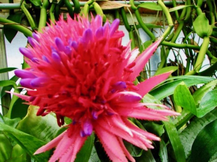 Gradina Botanica Regala din Edinburgh 2