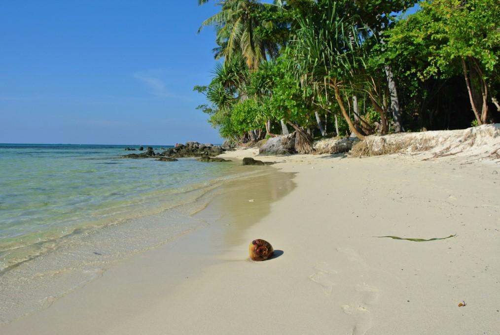 Apa de cocos asia (15)