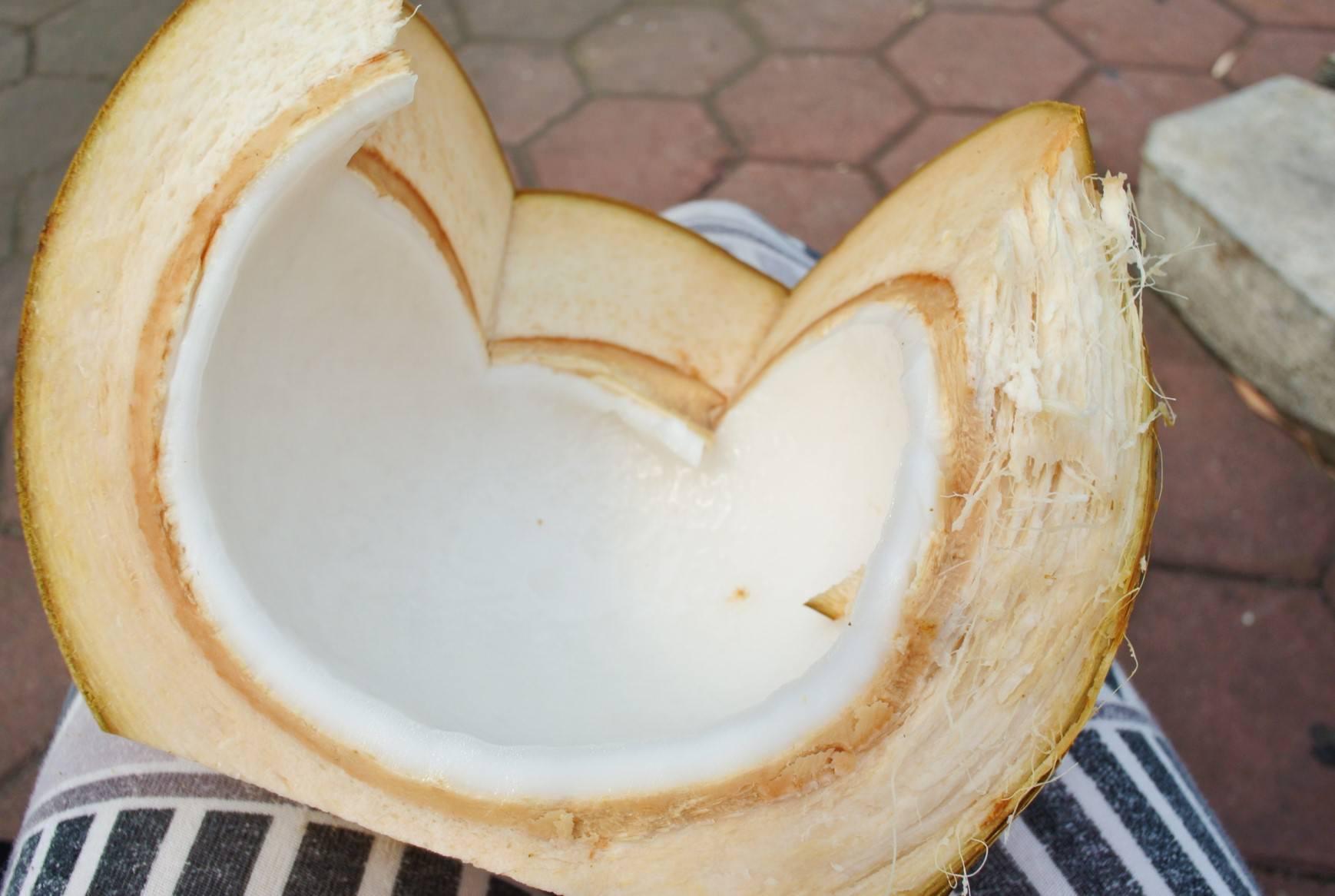 Apa de cocos asia (8)