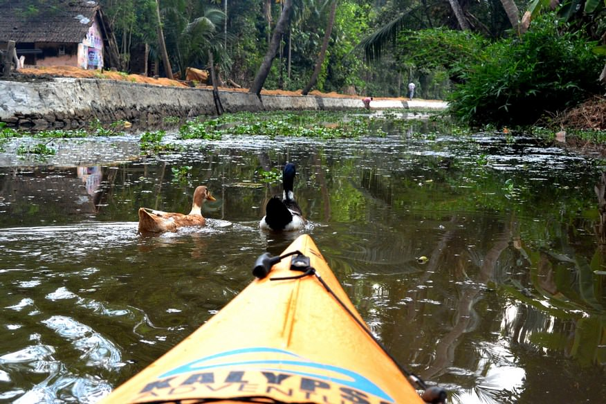 Caiac Kalypso Adventures Backwaters Kerala (24)