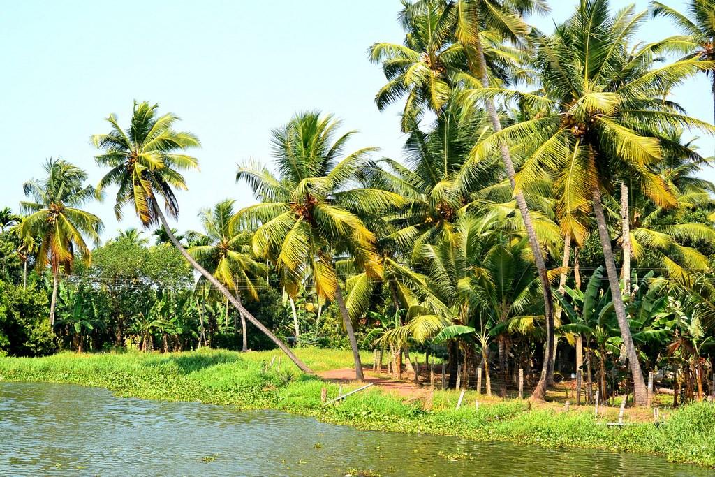 Croaziere Kerala India (4)