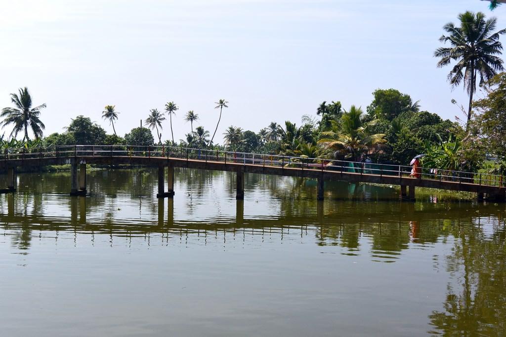 Croaziere Kerala India (48)