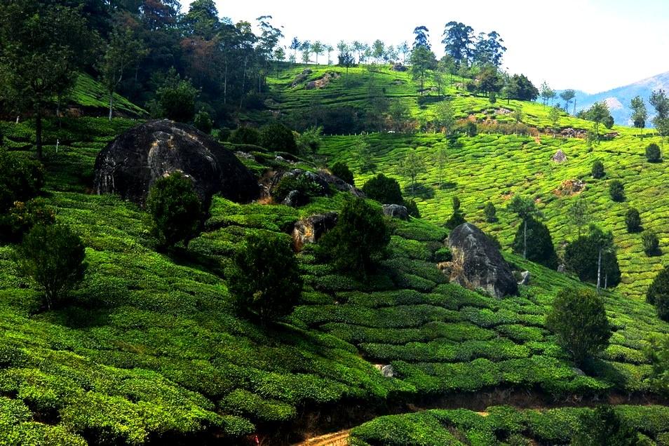 Munnar Kerala 1 (4)