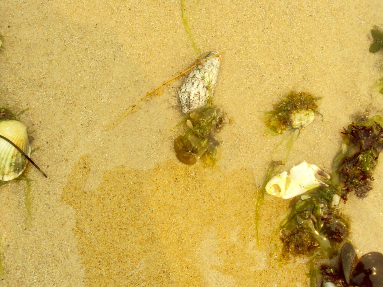 insulele Armona Culatra Farol Algarve plaja 2