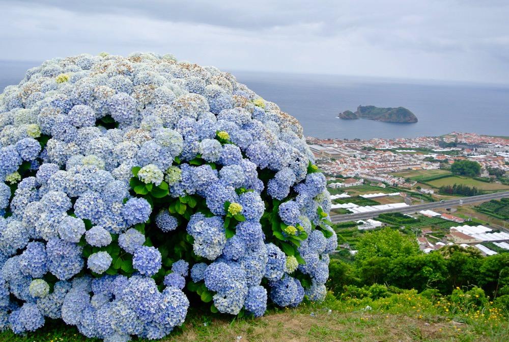 peisaje-natura-insulele-azore-vulcani-lacuri-hortensii11