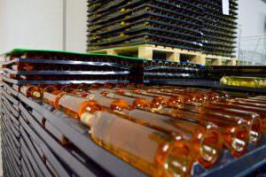 Depozit vin crama AVINCIS