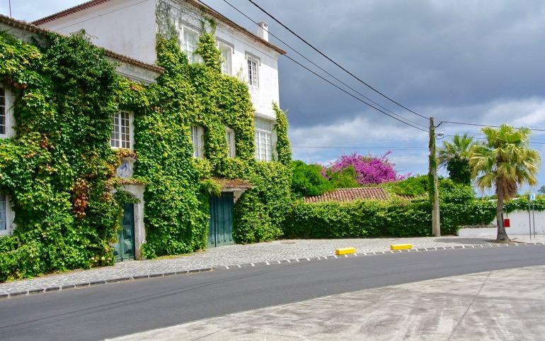 Ananas afican Azore insula Sao Miguel vizita 2