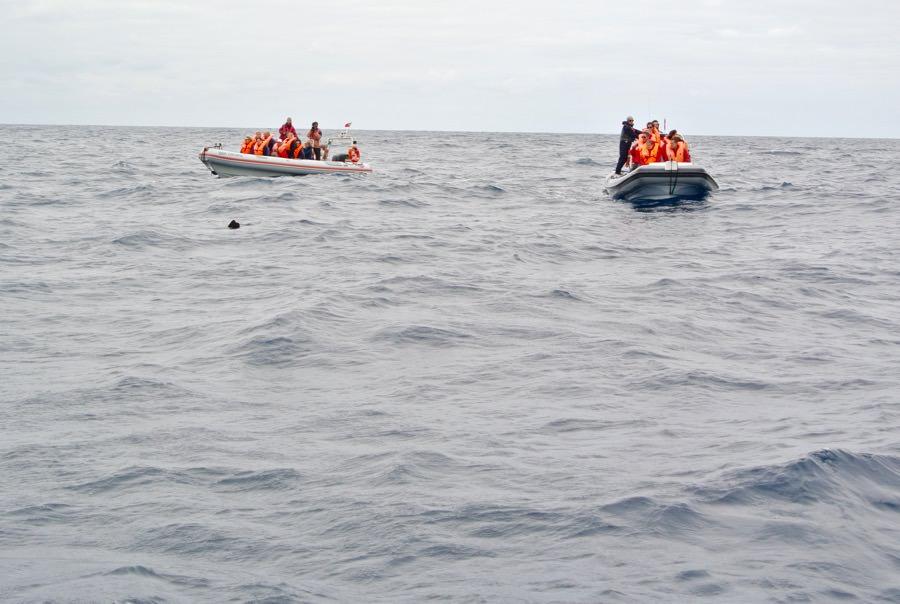 Excursie Zodiac Atlantic Azore balene