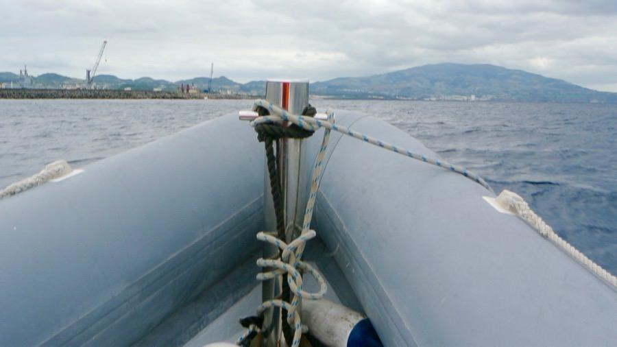 Croaziera balene delfini insula Sao Miguel 7