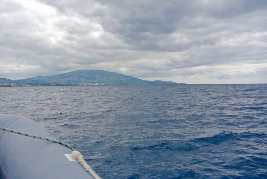 Croaziera balene delfini insula Sao Miguel 8