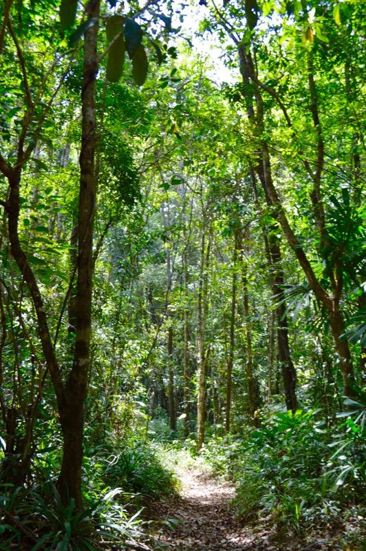 Krabi Jungle Safari izvoare termale Templul Grota Tigrului 7 18