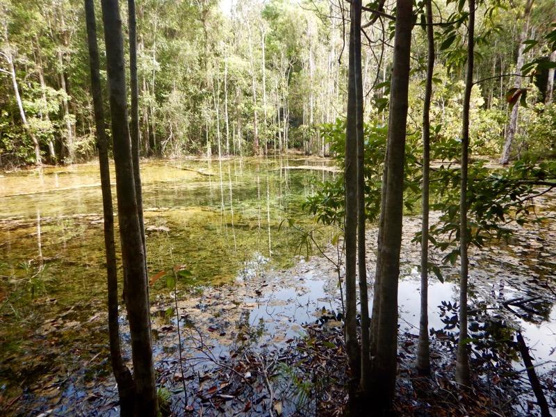 Krabi dincolo de plaje: Jungle Safari, izvoare termale Templul Grota Tigrului 2