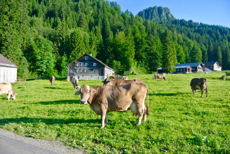 Schönenbach Vorarlberg Austria 24