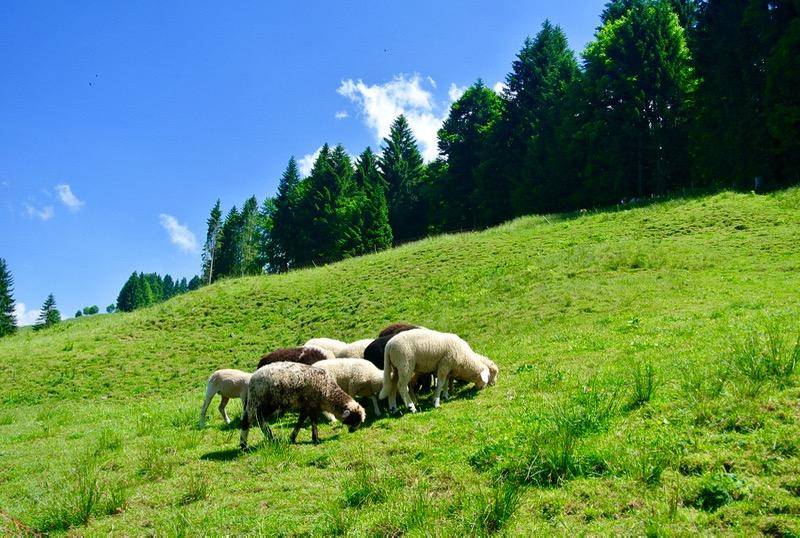 Schönenbach Vorarlberg Austria 2