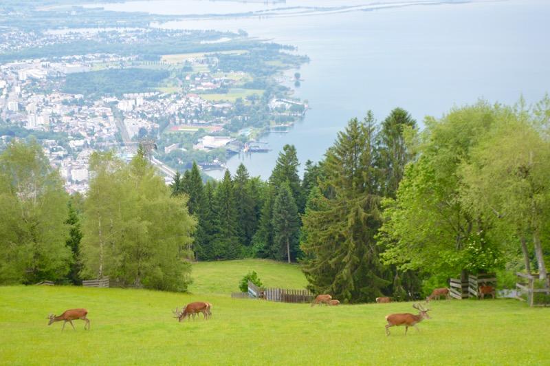 atractii turistice în Bregenz Vorarlberg gondola 2