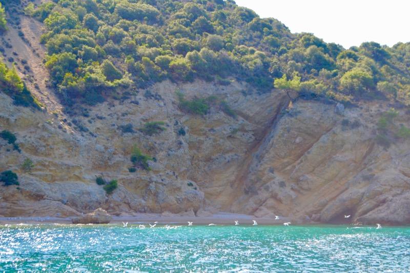 Agios Sostis Limenaria Potos Coraziere in Thassos 20 31