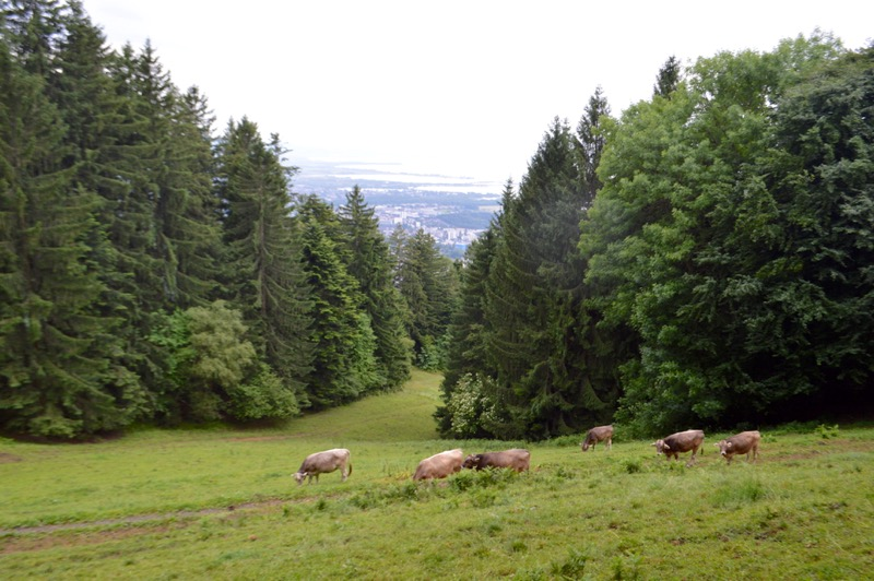 telecabina pe muntele Pfander Bregenz Vorarlberg 17
