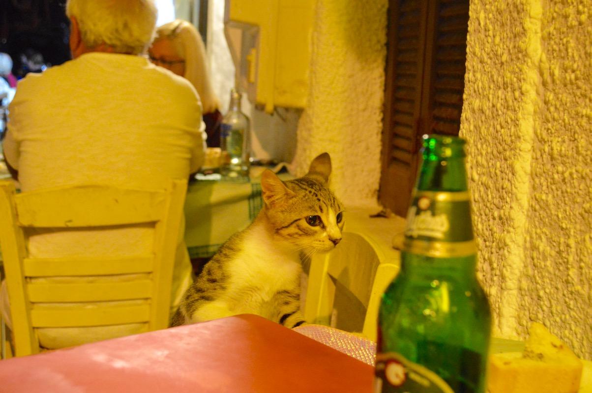 Taverna Koykoytsis Limenaria Thassos cina 3 pisici 3