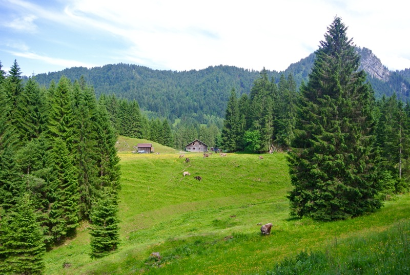 traseu drumetie satulSchönenbach Bregenzerwald Vorarlberg Austria atractii turistice1 26