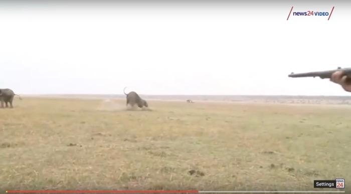 turma elefanti ataca vanatorii namibia