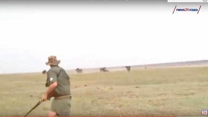 turma elefanti ataca vanatorii namibia 4
