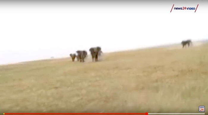 turma elefanti ataca vanatorii namibia 6