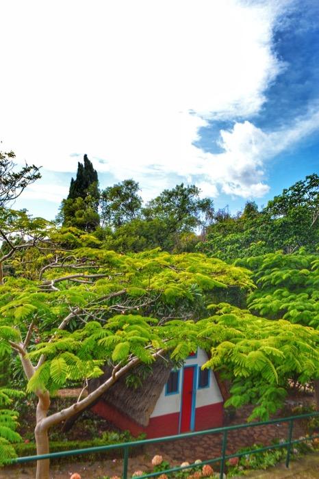 fotografii din Madeira 35