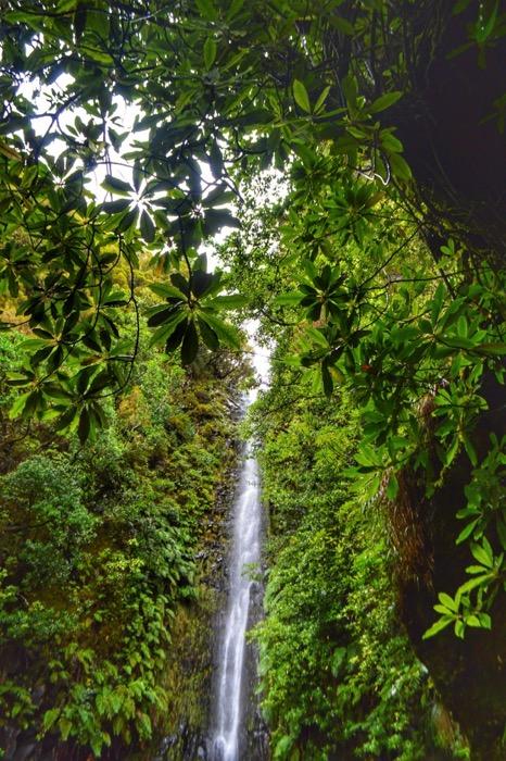 fotografii din Madeira 20