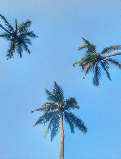 Circuit Sri Lanka: zborul București-Colombo, Hotelul Pegasus Reef 3