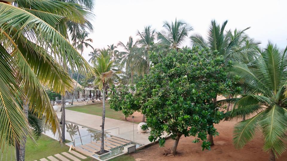 Circuit Sri Lanka: zborul București-Colombo, Hotelul Pegasus Reef 29