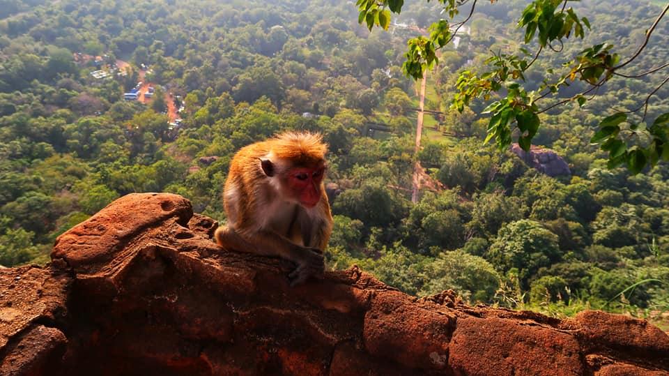 Sri Lanka in fotografii 46