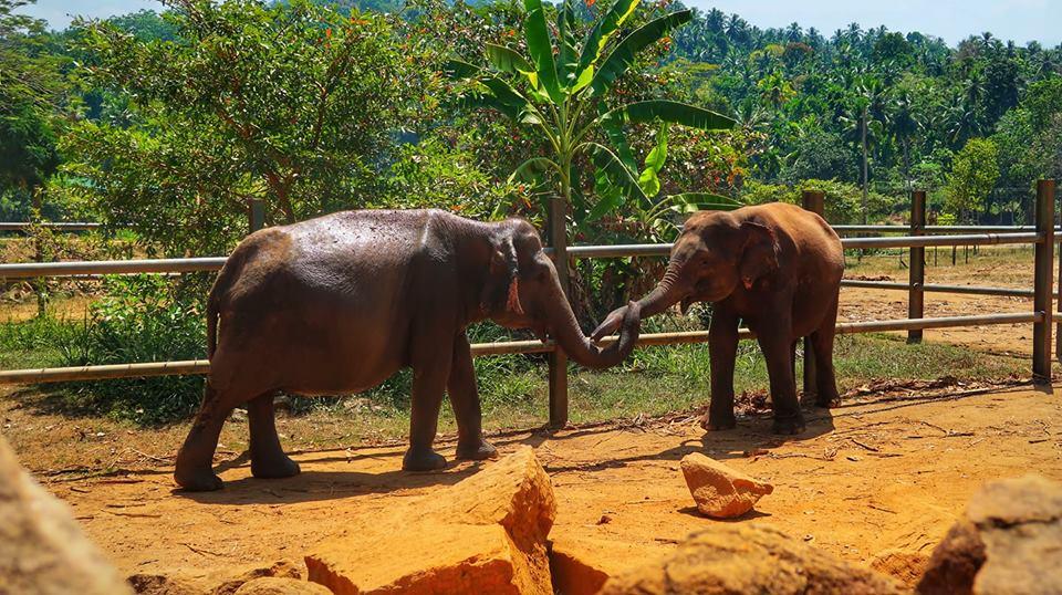 Sri Lanka in fotografii 44