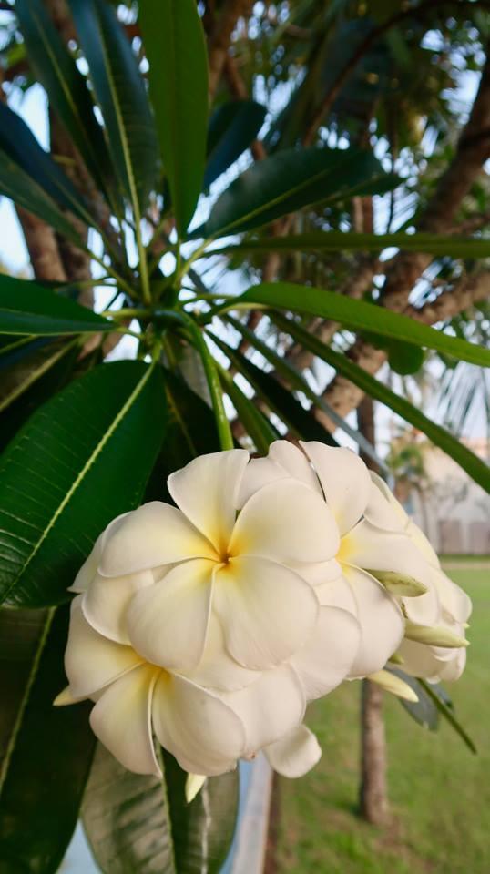 Sri Lanka in fotografii 33