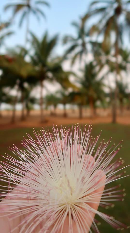 Sri Lanka in fotografii 32