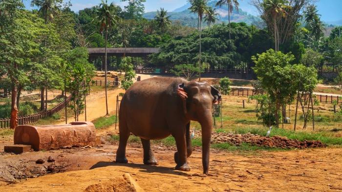 Sri Lanka in fotografii 30