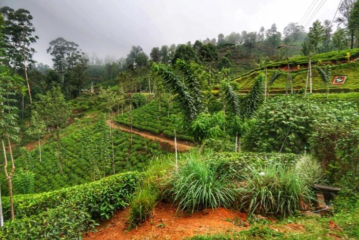 Sri Lanka in fotografii 19