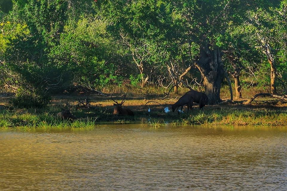 Sri Lanka in fotografii 42