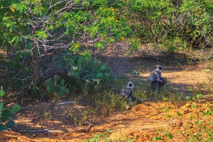 Sri Lanka in fotografii 16