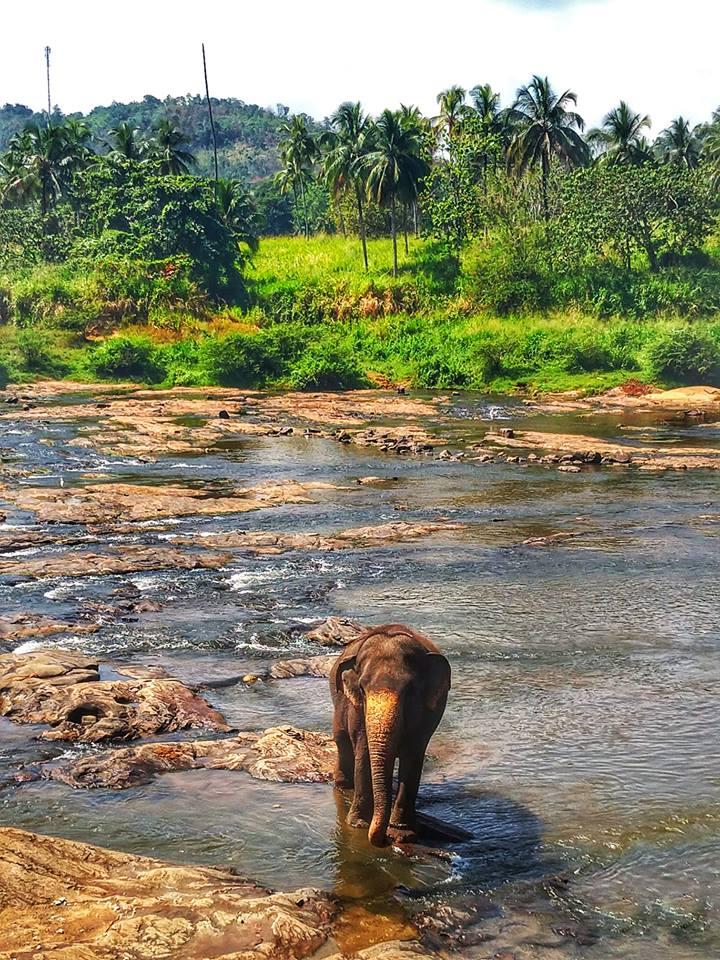 Sri Lanka in fotografii 36