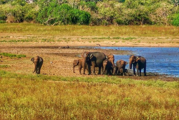 Sri Lanka in fotografii 11