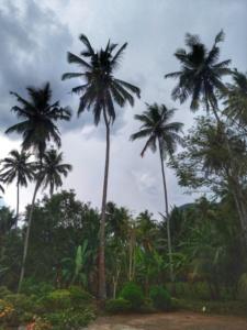 Dambulla Matale Kandy Sri Lanka batik 3