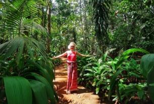 Dambulla Matale Kandy Sri Lanka gradina mirodenii 1
